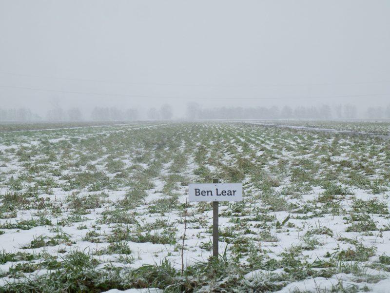 Sneeuw Ben Lear 1