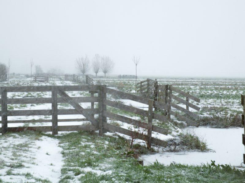 Sneeuw Hekken 1